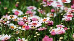 MULTATERAPIAA – puutarhurin blogi