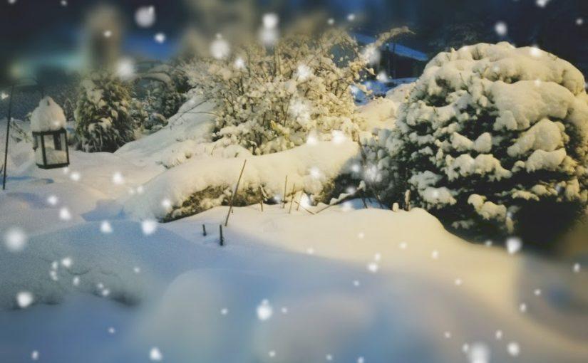 Talvipuutarhan hoito